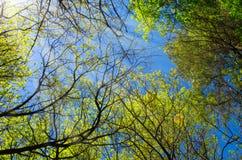 Οι κλάδοι των δέντρων με τα φύλλα ενάντια στο μπλε ουρανό φωτίζονται από τον ήλιο ` s Στοκ Φωτογραφίες