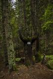 Οι λίβρες Orpheus Στοκ εικόνες με δικαίωμα ελεύθερης χρήσης