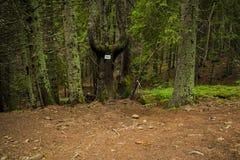 Οι λίβρες Orpheus Στοκ φωτογραφία με δικαίωμα ελεύθερης χρήσης