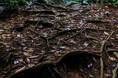 Οι λεπτές ρίζες στο χώμα και βγάζουν φύλλα Στοκ Φωτογραφίες