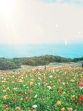Οι λόφοι καλλιεργούν λουλούδια στοκ φωτογραφίες