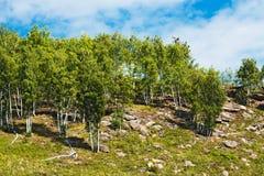 Οι λόφοι με τις πέτρες Altai, νότια Σιβηρία, Ρωσία στοκ φωτογραφίες