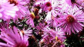 Οι μέλισσες έχουν προσαρμοστεί στην τροφή με το νέκταρ και τη γύρη απόθεμα βίντεο