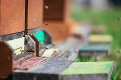 Οι μέλισσες συσσωρεύουν: Πέταγμα στους προσγειωμένος πίνακες στοκ εικόνες