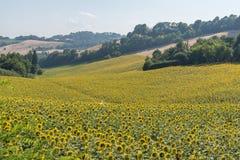 Οι μέσοι αγροτικοί τομείς καλοκαιρινών διακοπών της Ιταλίας ρωτούν τους τρυφερούς λόφους στοκ εικόνα