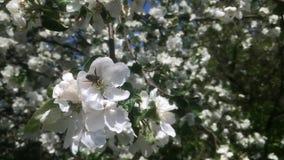 Οι μέλισσες θέματος απόθεμα βίντεο