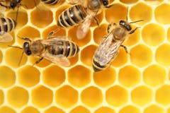 Οι μέλισσες πηγαίνουν Στοκ Εικόνες