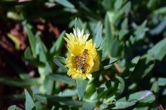 οι μέλισσες ράβδων καθαρίζουν την εργασία νέκταρ πλαισίων Στοκ φωτογραφία με δικαίωμα ελεύθερης χρήσης