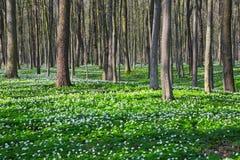 Οι μαύρες σκιές είπαν ψέματα στην πράσινη χλόη και τα άσπρα λουλούδια στο χορτοτάπητα με Στοκ εικόνες με δικαίωμα ελεύθερης χρήσης