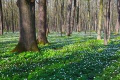 Οι μαύρες σκιές είπαν ψέματα στην πράσινη χλόη και τα άσπρα λουλούδια Στοκ φωτογραφίες με δικαίωμα ελεύθερης χρήσης