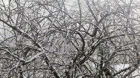 Οι μεγάλες νιφάδες χιονιού πέφτουν από τον ουρανό ενάντια φιλμ μικρού μήκους