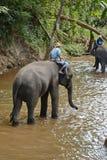Οι μη αναγνωρισμένοι άνθρωποι λούζουν τους ελέφαντες στον ποταμό της Mae Sa Noi στη Mae S Στοκ Φωτογραφίες