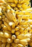 οι μπανάνες συσσωρεύουν τεράστιο ώριμο Στοκ Εικόνα