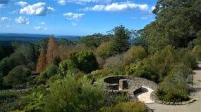 Οι μπλε βοτανικοί κήποι βουνών σε NSW Αυστραλία στοκ φωτογραφίες