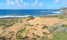 Οι Μπους και άμμος σε Argentiera Στοκ Εικόνες