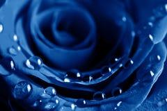οι μπλε απελευθερώσε&iot Στοκ Εικόνες