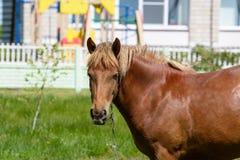 Οι μύγες δαγκώνουν το άλογο στοκ φωτογραφία με δικαίωμα ελεύθερης χρήσης