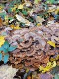 Οι μύκητες ξεφυτρώνουν δασικό πάτωμα στοκ φωτογραφίες