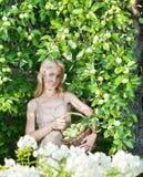 Οι νέες δαπάνες γυναικών με ένα καλάθι των πράσινων μήλων ενάντια σε ένα Apple-δέντρο καλλιεργούν Στοκ Εικόνα