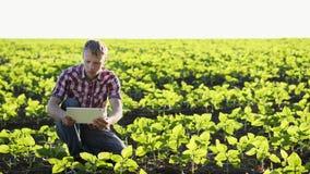 Οι νέοι βλαστοί εικόνων αγροτών του ηλίανθου στον τομέα απόθεμα βίντεο