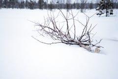 Οι νεολαίες κόβουν το δέντρο Στοκ Εικόνες