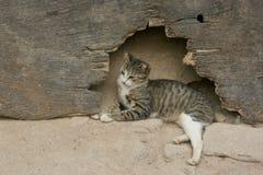 Οι νεολαίες απομακρύνονται γάτα προσέχουν την οδό στη Γκάνα Στοκ φωτογραφία με δικαίωμα ελεύθερης χρήσης