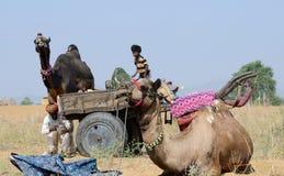 Οι νομαδικοί άνθρωποι τσιγγάνων προετοιμάζονται στις παραδοσιακές δίκαιες διακοπές βοοειδών, Ινδία Στοκ εικόνες με δικαίωμα ελεύθερης χρήσης