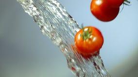 Οι ντομάτες πέφτουν μέσω της προβολής ύδατος απόθεμα βίντεο