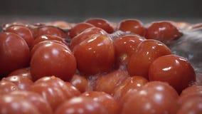 Οι ντομάτες στο νεροχύτη απόθεμα βίντεο