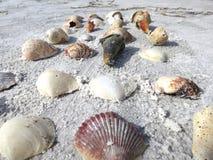 Οι ξάντες παραλιών βρίσκουν τα θαλασσινά κοχύλια στοκ φωτογραφία