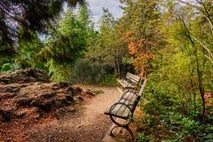 Οι ξύλινοι πάγκοι στους θάμνους και τα δέντρα σε ένα πάρκο με μια πέτρα λικνίζουν Στοκ Φωτογραφίες
