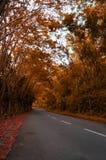 Οι οδοί που περιβάλλονται μόνες από τα δέντρα φθινοπώρου Στοκ φωτογραφία με δικαίωμα ελεύθερης χρήσης