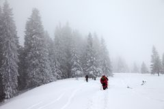 Οι οδοιπόροι ανεβαίνουν στην κλίση χιονιού στο χιονισμένο δάσος στο χειμώνα ελαφριάς ομίχλης Στοκ εικόνα με δικαίωμα ελεύθερης χρήσης
