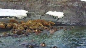 Οι οδόβαινοι στο υπόβαθρο του αρκτικού ωκεάνιου aero ακτών ερήμων βλέπουν στη νέα γη απόθεμα βίντεο