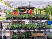 Οι οικογενειακοί αγρότες προετοιμάζουν τις φυτικές ενάρξεις στους αγρότες Corvallis χαλούν στοκ φωτογραφία