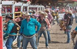 Οι ομάδες των κάουμποϋ προετοιμάζονται να απελευθερώσουν τα άλογα στο χώρο για τον άγριο αγώνα αλόγων στην άτακτη φυγή Στοκ Φωτογραφία
