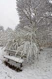 Οι πάγκοι και το δέντρο φαίνονται άσπροι Στοκ φωτογραφία με δικαίωμα ελεύθερης χρήσης