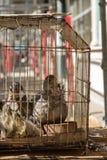 Οι πάπιες στο κλουβί πωλούν στην αγορά τροφίμων Στοκ φωτογραφία με δικαίωμα ελεύθερης χρήσης
