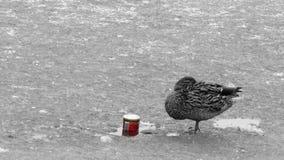 Οι πάπιες φορούν το ποτό ` τ αυτό Στοκ εικόνες με δικαίωμα ελεύθερης χρήσης