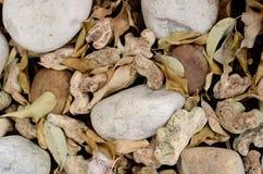 Οι πέτρες, αφήνουν και αφήνουν το υπόβαθρο Στοκ εικόνες με δικαίωμα ελεύθερης χρήσης