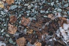 Οι πέτρες αφήνουν τον παγετό χιονιού που το ξηρό καφετί γκρίζο μαύρο χειμερινό κρύο σύστασης επάγωσε Στοκ Εικόνες
