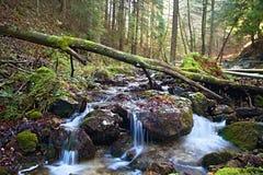 Οι πέτρες στο ρεύμα βουνών στην κοιλάδα των τρυπών Janosik Ελκυστική θέση για την πεζοπορία για την καθεμία στοκ εικόνες