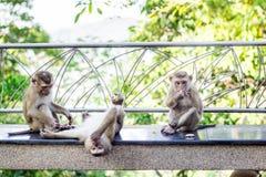 Οι πίθηκοι κατά τη διάρκεια του εύθυμου χρόνου Στοκ εικόνα με δικαίωμα ελεύθερης χρήσης
