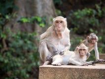 Οι πίθηκοι στοκ εικόνα