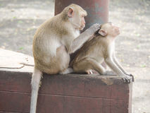 Οι πίθηκοι στοκ φωτογραφία με δικαίωμα ελεύθερης χρήσης