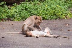 Οι πίθηκοι στοκ εικόνες με δικαίωμα ελεύθερης χρήσης