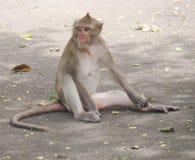 Οι πίθηκοι στοκ εικόνα με δικαίωμα ελεύθερης χρήσης