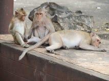 Οι πίθηκοι στοκ εικόνες