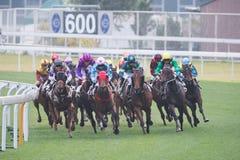 οι παίκτες μερισμάτων παρουσίασης πήραν τη Hong πώς kong πολύ racecourse πιθανοτήτων sha εμφανίζοντας κασσίτερο Στοκ εικόνες με δικαίωμα ελεύθερης χρήσης