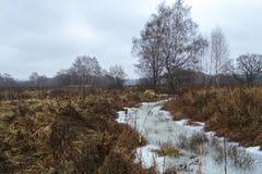 Οι παγετοί του πρώτου φθινοπώρου Στις δοκιμαστικές λειτουργίες σκυλιών χλόης Πρόσφατο φθινόπωρο Στοκ Εικόνα